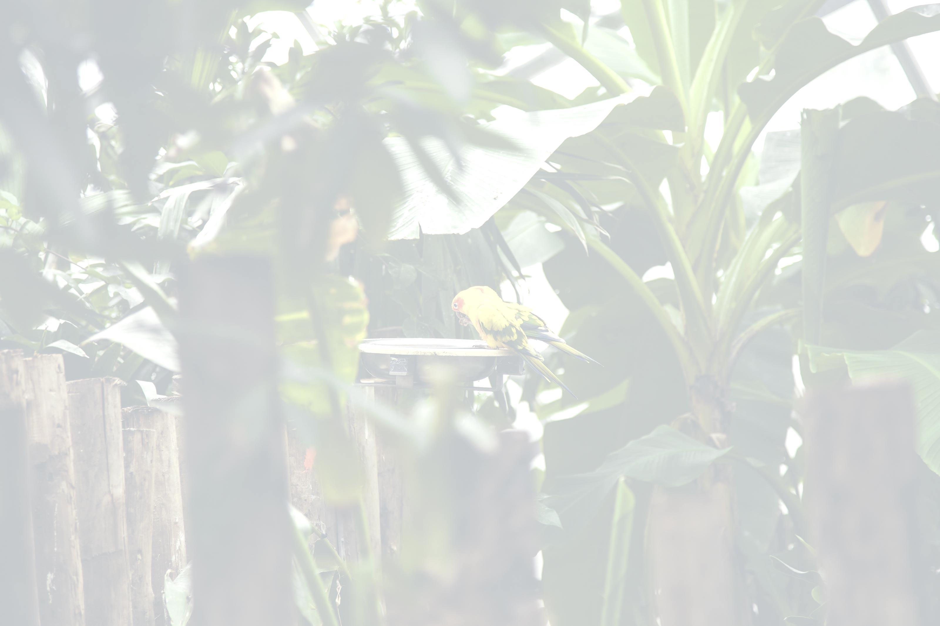 adbd5743-exotic-parrots.jpg